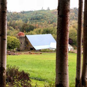 Wild Thyme Farm